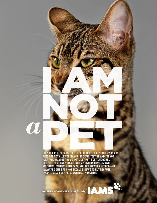 """This Iams print ad has a communication objective of emphasizing that people don't think of their pets as """"pets"""" but more like family who deserve the best food. The headline is """"I Am Not a Pet"""" with the illustration of a cat, and they work together because the dialogue of the body copy and headline reflect what a family's cat would think to themselves, understanding that they deserve the best because they share a relationship with their owner that goes beyond """"owner"""" and """"pet."""""""