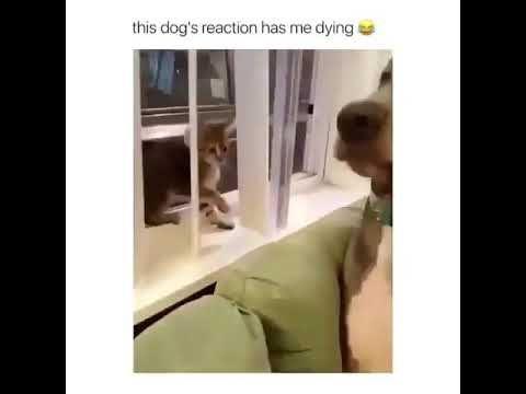 Kitten vs Dog - Video