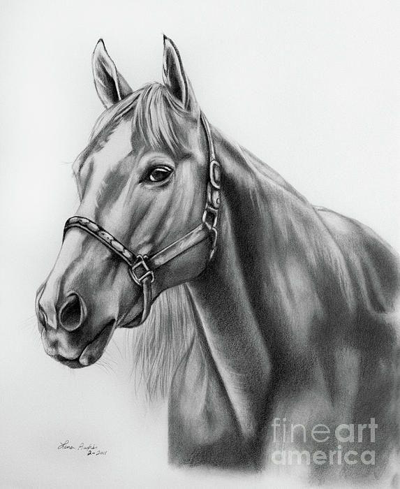 Pencil drawing of a horse. Wow sommige mensen kunnen zo goed tekenen dat het net echt lijkt.