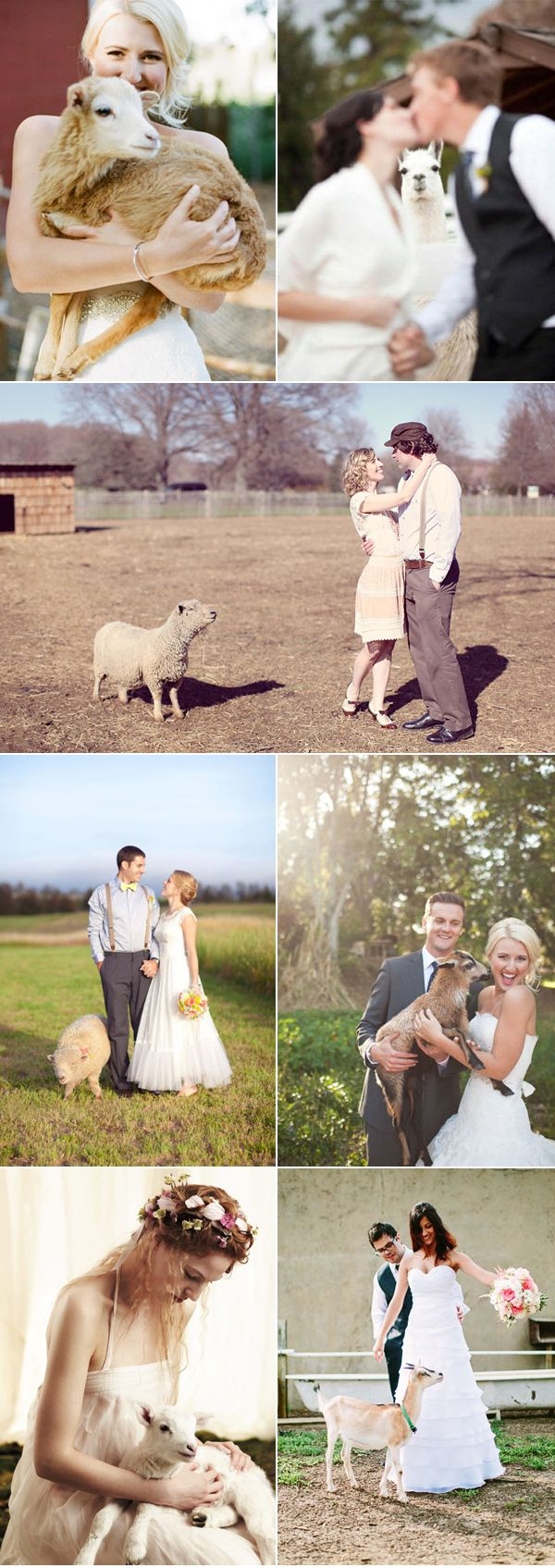 Lovely Farm Wedding Animals - sheep & goat family
