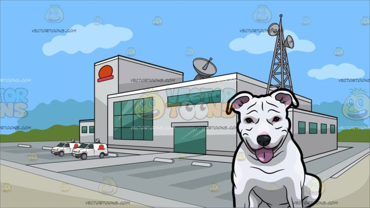 A Friendly Pit Bull Dog With Outside A Tv Station Background :  An adult dog with white short fur looks ahead while showing its pink tongue and A building with light gray exterior walls a huge parking area antennas and satellites green glass windows and a red logo situated on an open area and surrounded by green trees in the background with blue sky