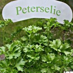 Peterselie is lekker bij sla of in sauzen. Daarnaast is het supergezond! Het geneest oorontsteking, diarree, bloedarmoede en zelfs borstkanker volgens... http://mens-en-gezondheid.infonu.nl/gezonde-voeding/80679-peterselie-kruid-met-geneeskracht.html