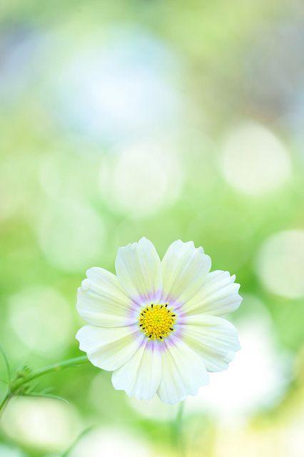 Lemonade | Flickr - Photo Sharing!