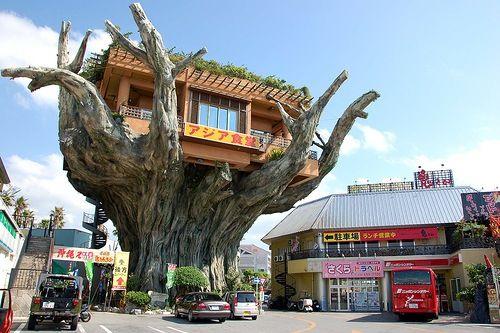 沖縄にあるツリーハウスレストラン「アジア食堂」 restaurant in japan