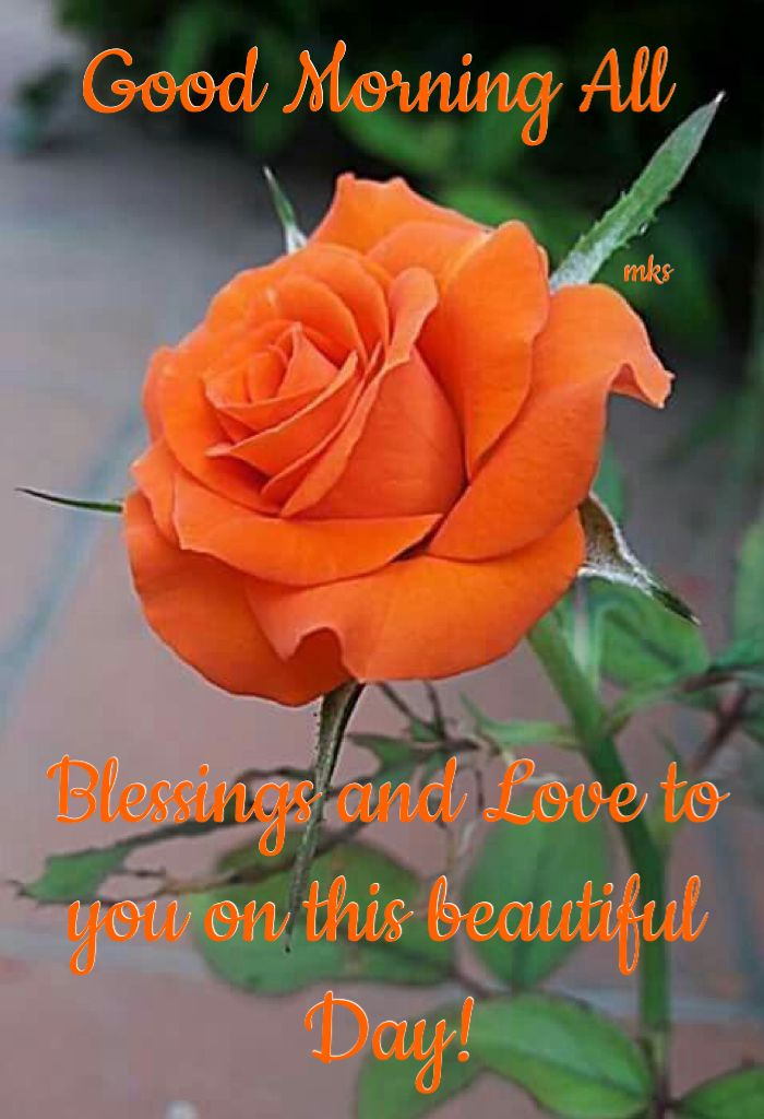 Hv A Great Sunday Beautiful Roses Love Flowers Most Beautiful