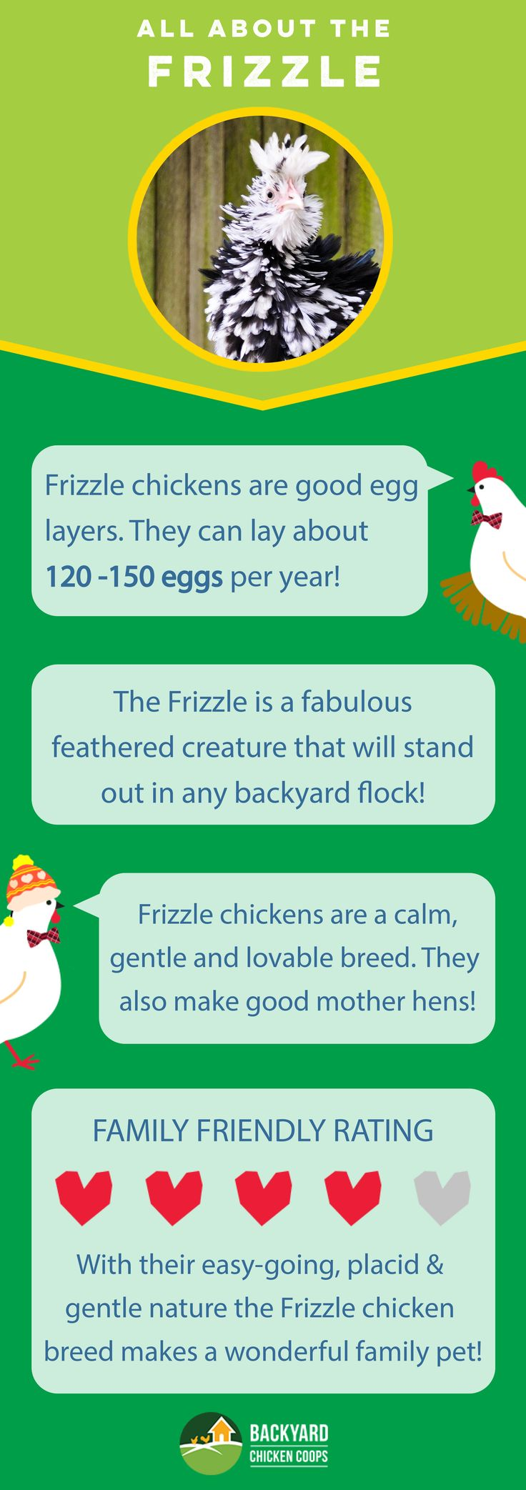 The Frizzle chicken is an all round brilliant breed. They make wonderful pets, produce a reliable amount of eggs and make a delightful addition to any backyard flock! Check out their breed profile here, http://www.backyardchickencoops.com.au/breed-profile-frizzle/ #loveyourchickens #infographic #frizzlechickens