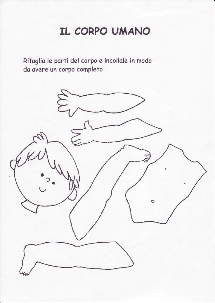 schede didattiche corpo umano scuola infanzia - Cerca con Google