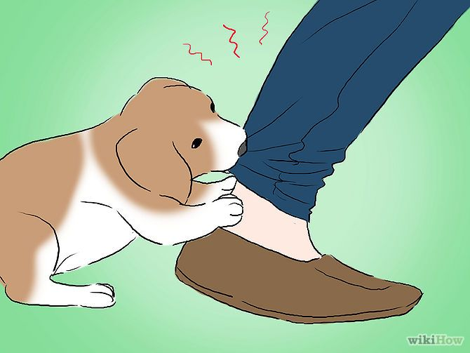 How To Stop Puppy Biting - #tips #dogs #training