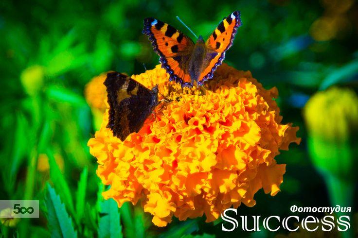 Butterflies by Дмитрий Волков on 500px