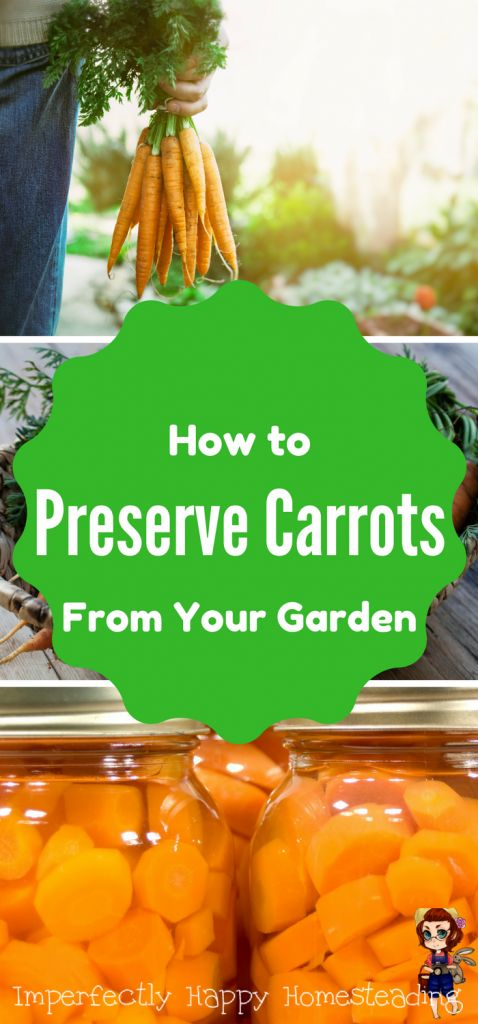 How to Preserve Carrots from Your Garden Harvest. Six different ways you can preserve your carrots.