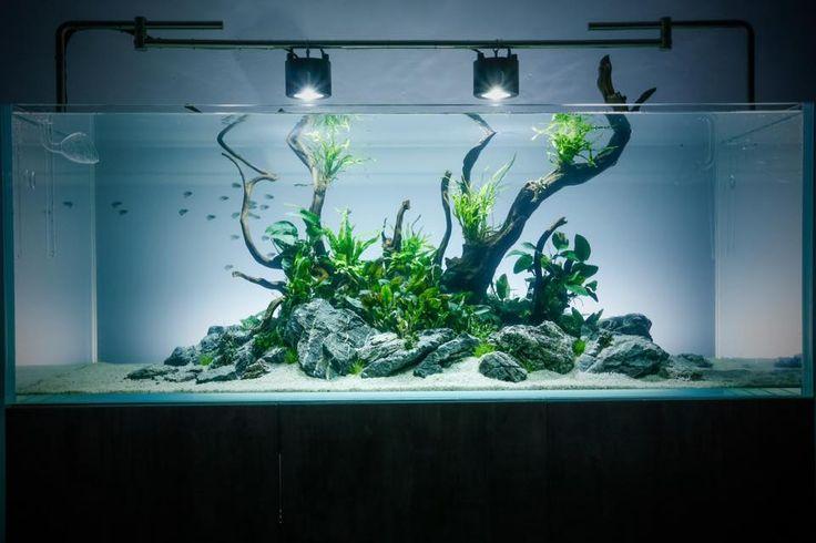 George Farmer - Aquascaper 1500 at Evolution Aqua HQ. Day One....
