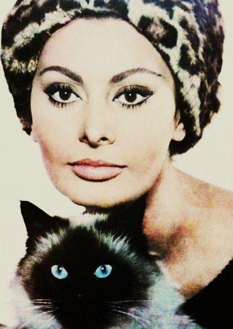 Sophia Loren, pretty ladies like cats