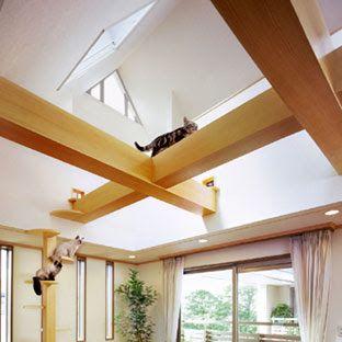 Plus-Nyan House, do arquiteto japonês Asahi Kasei: passarelas aéreas.