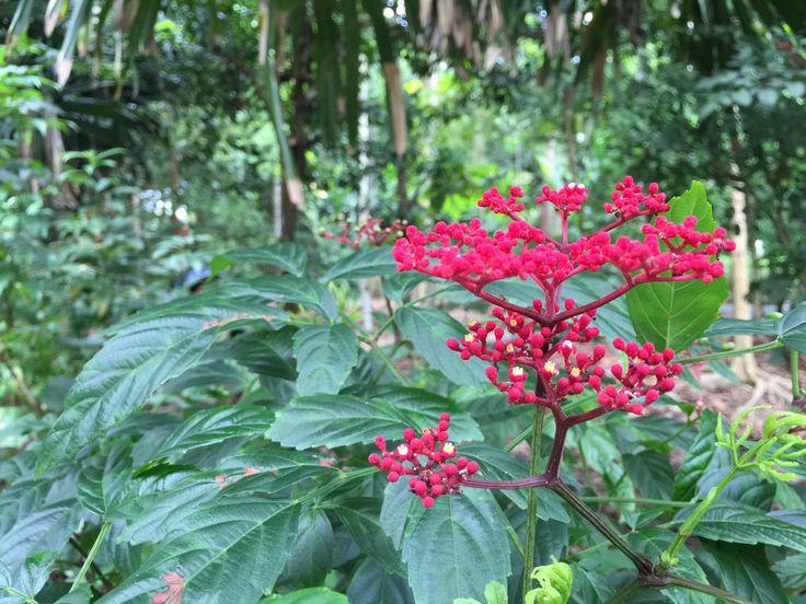 @singapore botanic gardens.sg