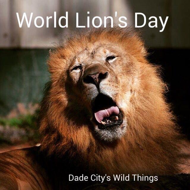World Lion's Day