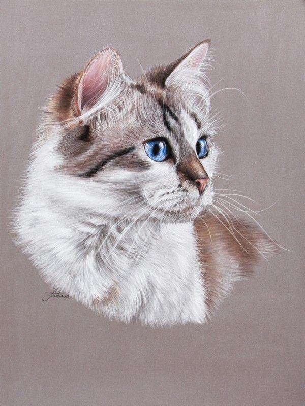 Animal Pastels   Pastels animaliers et équins - Photographies - Peintures