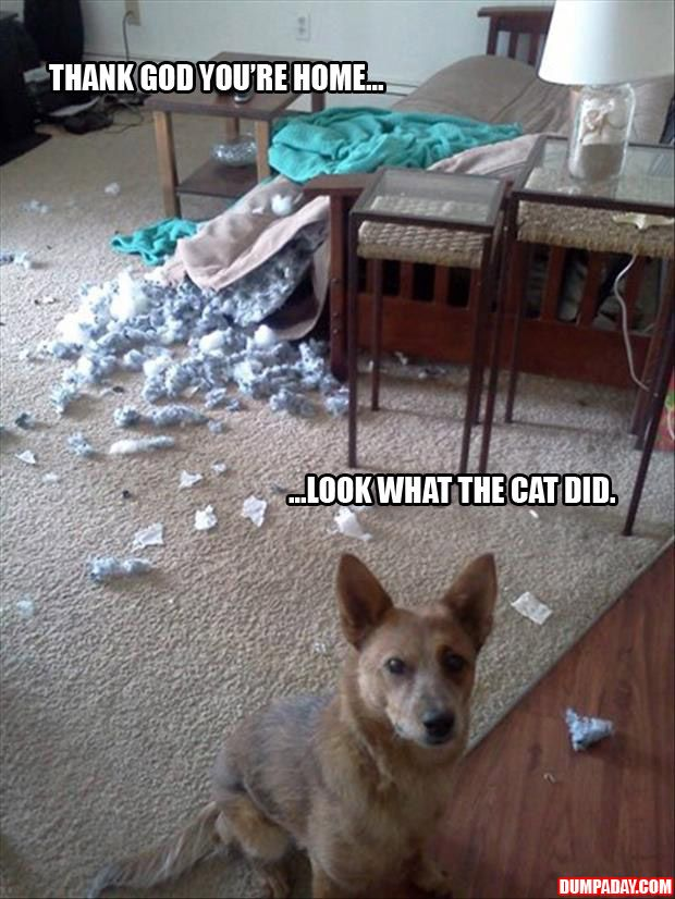 Thank god you re home look at what the cat did dog shaming