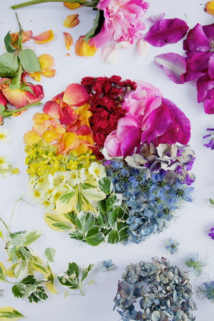 Co Color Wheel Art - Floral colour wheel free download to help improve your photography