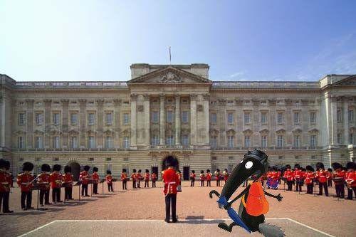 Buckingham (2)