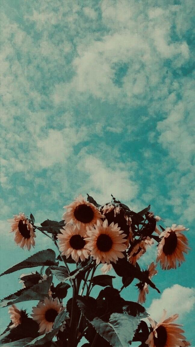 Pretty Sunflower Background Aesthetic Iphone Wallpaper Sunflower Wallpaper Painting Wallpaper