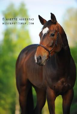 A-Motive Photography Hestefotografi | Hester 3
