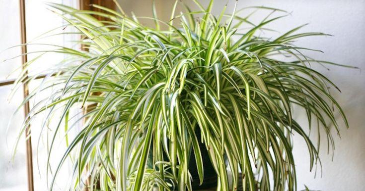 9 απίστευτα φυτά που καθαρίζουν τον αέρα καλύτερα από κάθε συσκευή που μπορεί να αγοράσετε | Τι λες τώρα;
