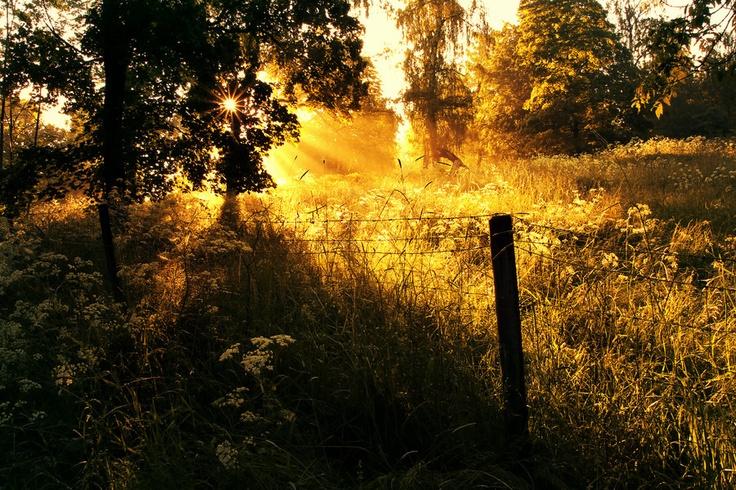 Golden touch by PawelMatys.deviantart.com