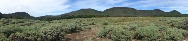 Padang edelweis