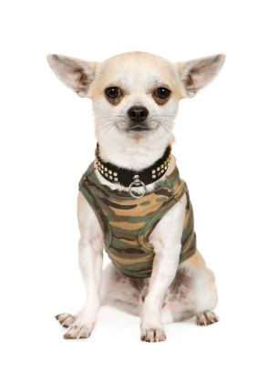 The Complete Guide To Chihuahua Clothes ...LOL I just may make a pet sweater out of a cool pair of socks.. they sure made it look easy <3