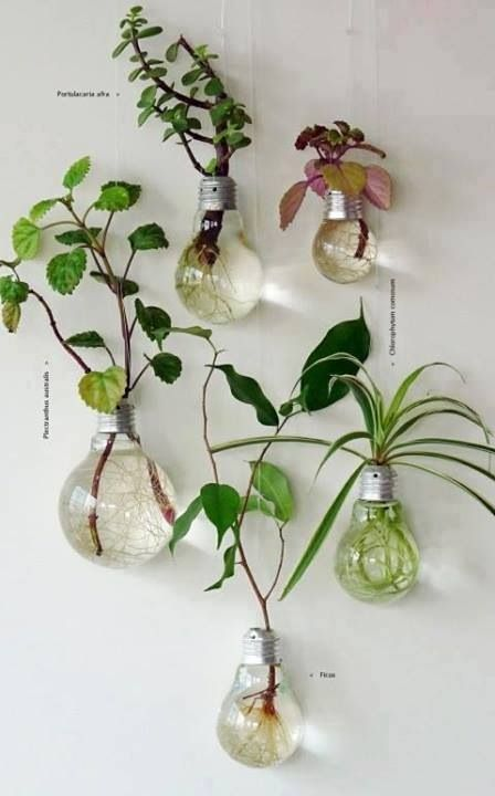 Plants in lightbulbs. easy wau to get some more life in your home