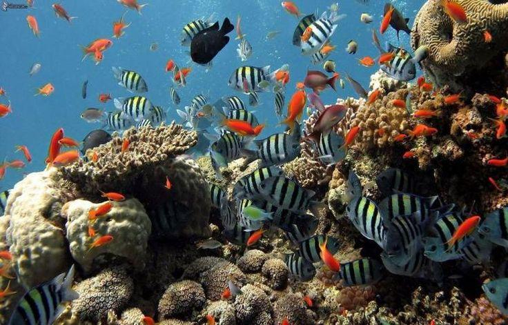 EE. UU. ampliará su mayor reserva marina en el océano Pacífico, en la que se impedirán las perforaciones petroleras y la mayor parte de la pesca, en un intento por proteger la frágil fauna submarina.