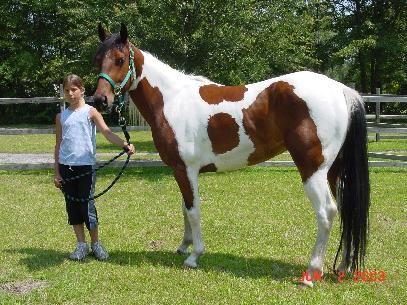 Paint Horses For Sale