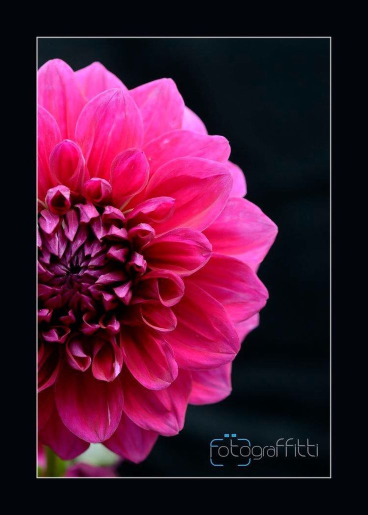 Fotograffitti Photography studio and Institute #flowerphotography #macrophotography #photographycoursekolkata