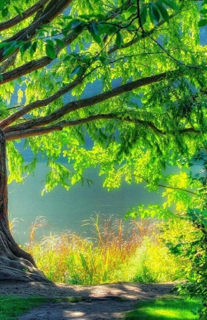 Picsart Nature Background Hd Images Download
