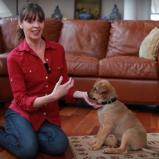 Victoria Stilwell teaches Dylan to sit, a cue that's the foundation of building a common language between a person and a dog.