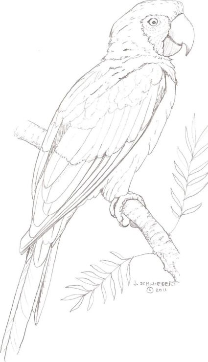328 best Coloring pages images on Pinterest Bird drawings, Drawing - new eagles to coloring pages