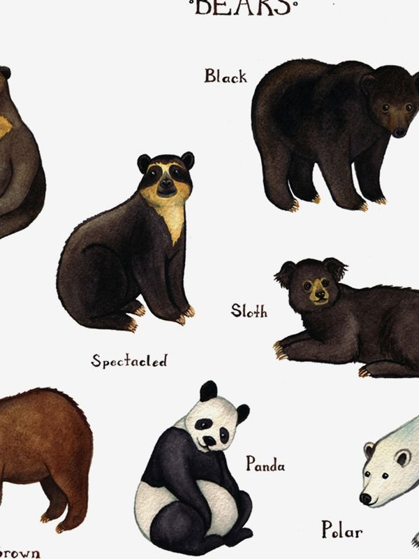 Bears Of The World Field Guide Art Print Lions And Tigers And Oh Bears This Painting Features Eight D Posters Art Prints Art Bear