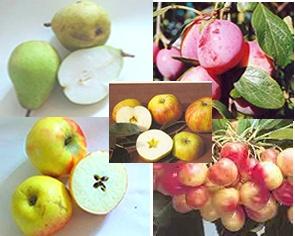 Fantastische kwekerij van (klein)fruit bomen en struiken in Buurse. Goede adviezen.