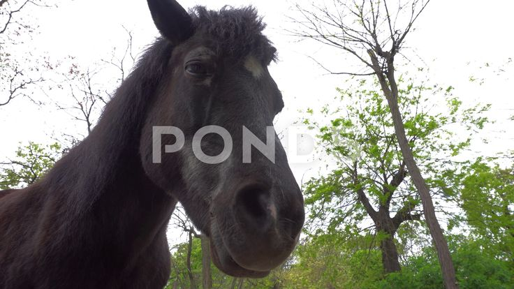 Horse Close up - Stock Footage   by botiordog