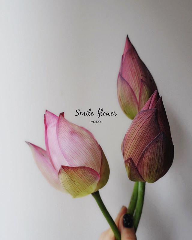 """여의도 스마일플라워앤카페 . #스마일플라워북 #연꽃  kakao id. 스마일플라워앤카페 블로그. http://blog.naver.com/smile-flower 인스타. https://instagram.com/smile_flower_cafe . """"당신의 스마일을 보고싶어요"""" 'for your smile' SMILE FLOWER . #smileflower #smilecafe #flowercafe #smile #flower #florist #flowershop #handtied #여의도 #여의도스마일 #여의도플라워 #선인장  #여의도꽃집 #스마일플라워 #스마일플라워카페 #플라워카페 #플로리스트 #꽃 #플라워 #핸드타이드 #꽃스타그램 #인테리어 #플라워클래스 #가드닝 #플라워데코"""
