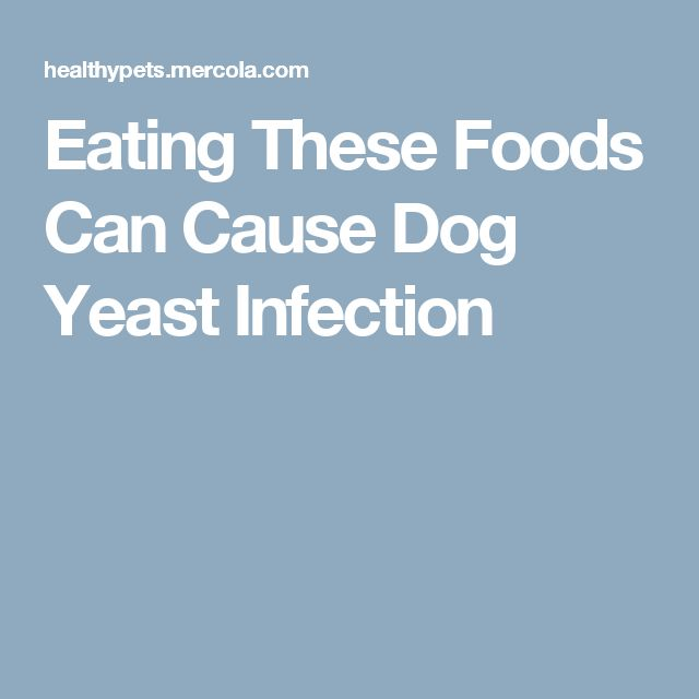 What Dog Foods Cause Yeast Infections