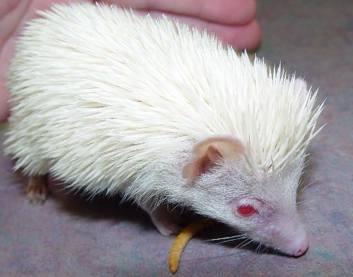 729 best images about White is beautiful. Albinism/Leucism ...