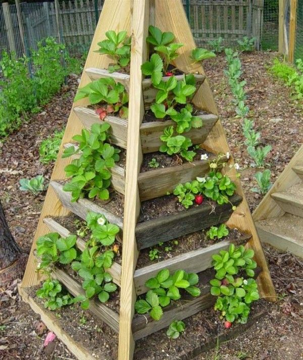 A pretty cool way of growing strawberries - possible pallet craft project? I might do half a pyramid and stand it against a wall.