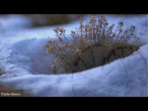 75 best MUSIC: JIM BRICKMAN images on Pinterest | Jim o'rourke ...