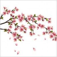 Flower beautiful peach 02 vector