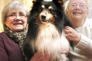 Породы собак, которые подходят пожилым людям | Домашние животные - кошки, собаки, грызуны, аквариумные рыбки, экзотические животные