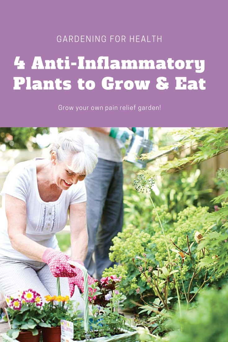 Battle inflammation with tasty herbs and plants that can aid digestion, ease pain and more.