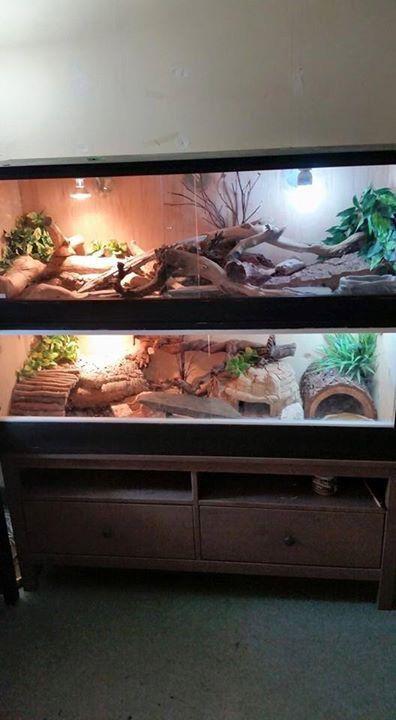 Awesome uromastyx enclosures. Credit Daniel Alexander Sevilla. Bearded Dragon CageBearded Dragon HabitatReptile ... & 20 best Bearded Dragon images on Pinterest | Reptile enclosure ...