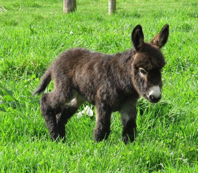 For some bizarre reason charlie thinks i do not need a mini donkey. Clearly i do.
