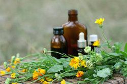 Concept of calendula flower essential oil and tincture